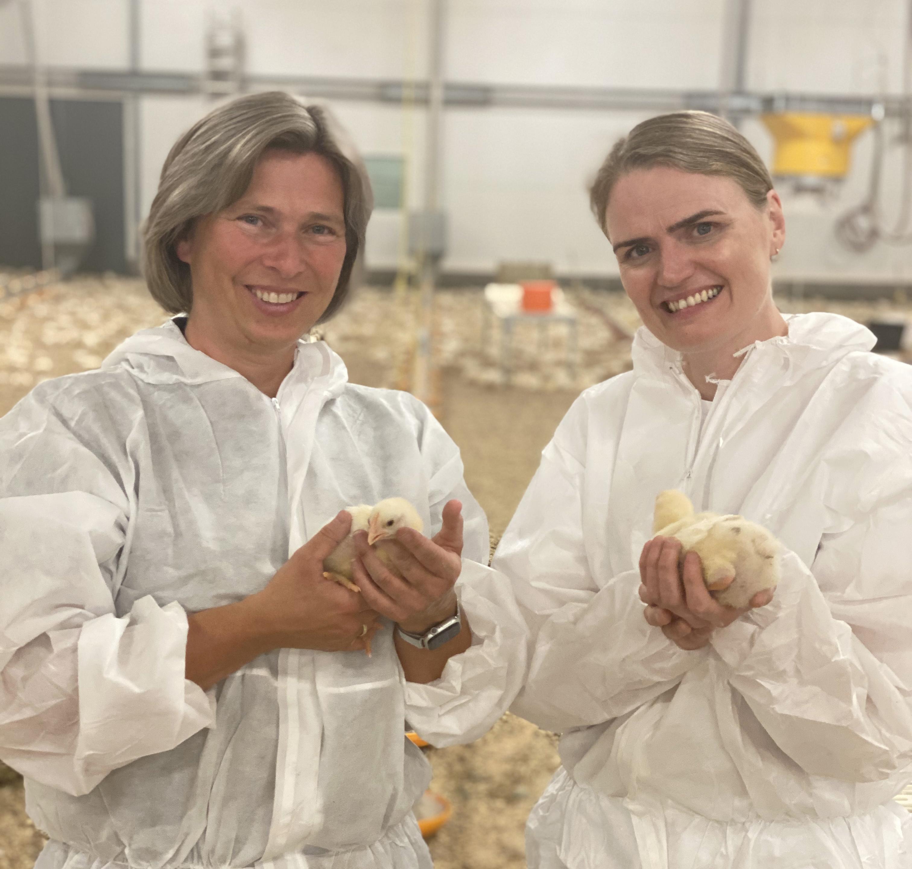 Norsk Kylling til topps på BBFAW Nordic sin internasjonal måling av selskapers fokus og forpliktelse til dyrevelferd