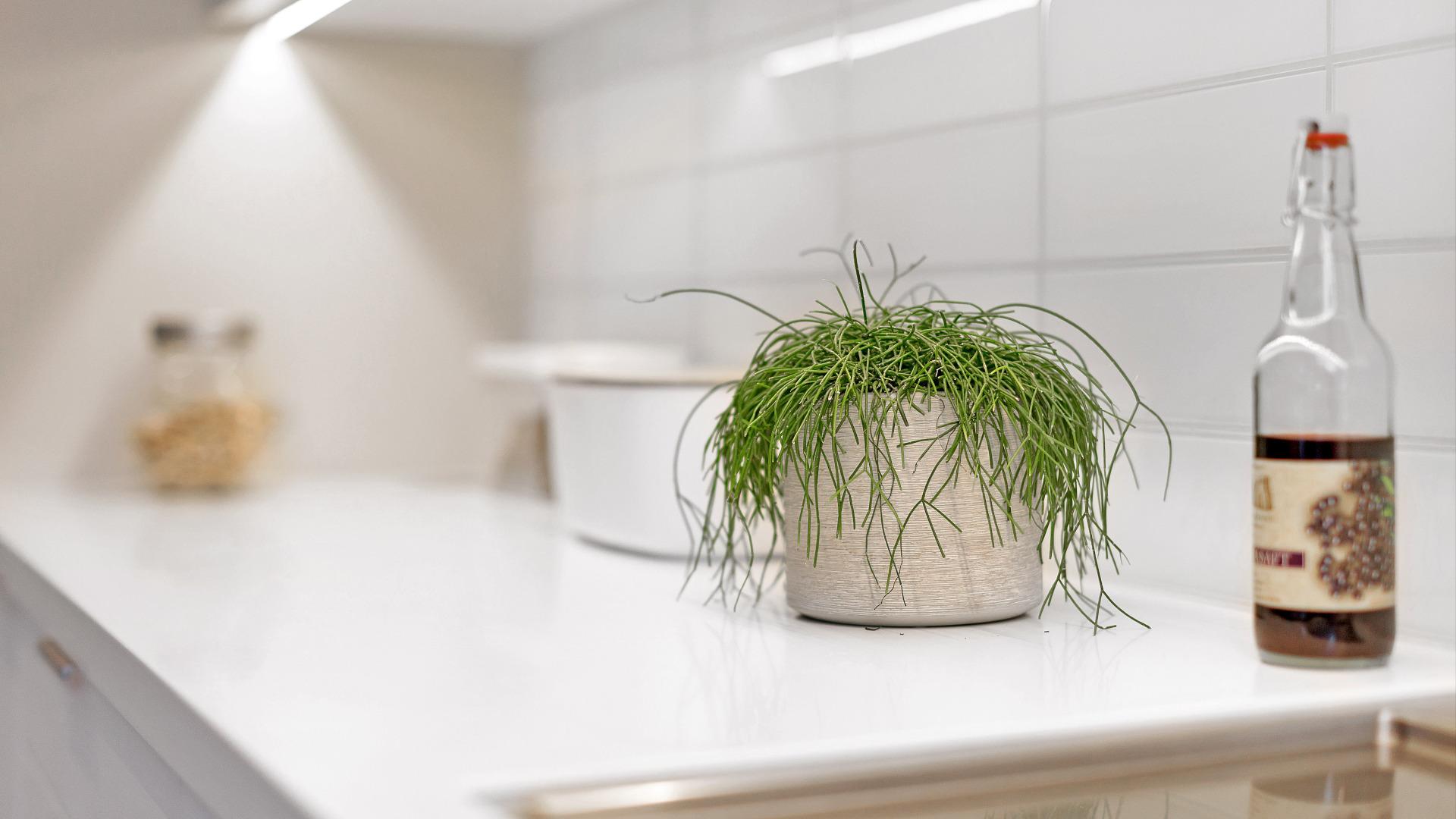 Krydderplante på kjøkkenet
