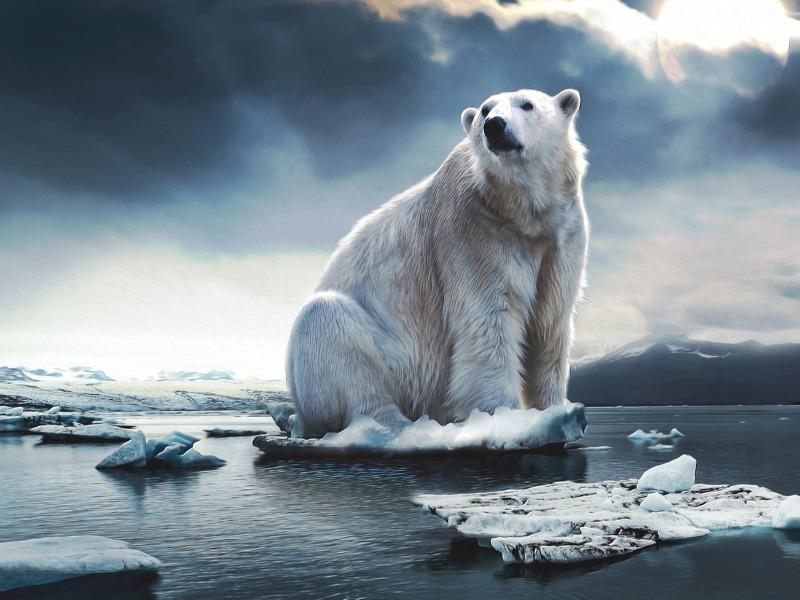polar-bear-4443364_1920.jpg