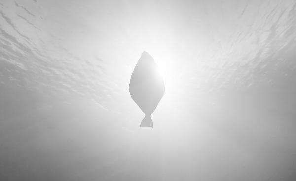 Glitne-shapedbynature.jpg